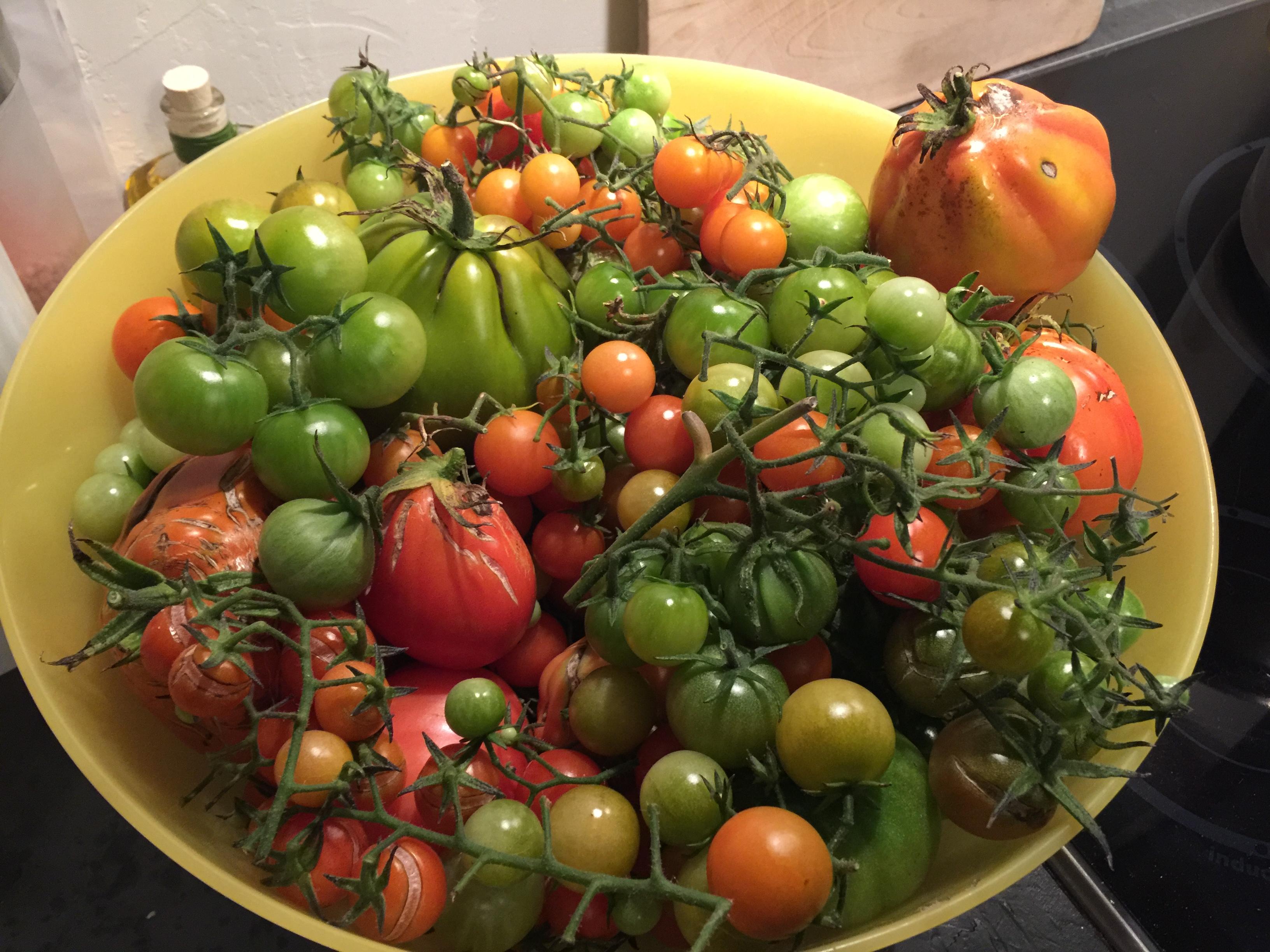 Fondue aux tomates